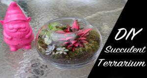 diy succulent terranium