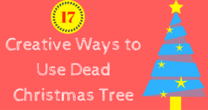 Creative Ways to Use Dead Christmas Tree