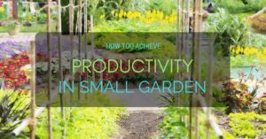 How To Achieve Productivity in Small Garden