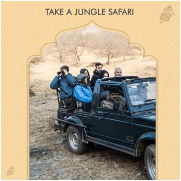 Take a jungle safari