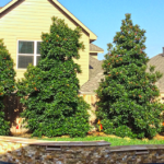 How to Effortlessly Get Rid Of Unwanted Trees in Your Home
