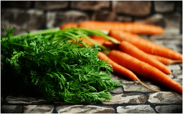 Lifespan and Usage of Carrots