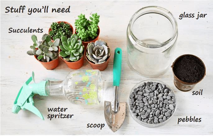 things you need succulents