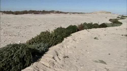 Stop Erosion with Christmas tree wall