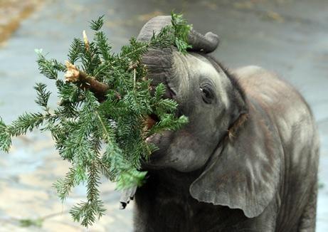 christmas tree for animal
