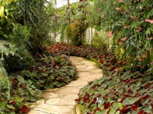 Gardening tips for your Garden Paradise