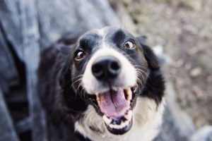 Ultimate Guide to Keeping Your Dog Fit and Healthy