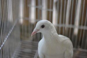 Ways to Make Your Home Bird-Friendly