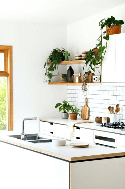 Implant life through plants in your kitchen