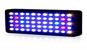 Best LED Grow Lights: Can an Unknown Best Grow Light Take the Top?