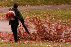Best Ways To Remove Leaves From Your Yard