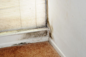 mold toxicity