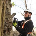 How Can You Select The Right Tree Cutting Service