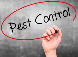 Why Should You Get Termite Treatment from Pest Control Services in Madison