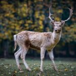 Biggest Deer Hunting Mistakes to Avoid