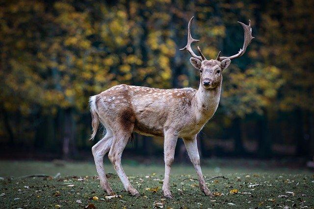 Biggest Deer Hunting Mistakes to Avoid