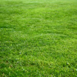 How To Keep Your Lawn Green While Everything Else Withers