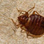 Bug Control Tips