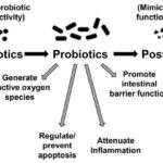 Prebiotics, Probiotics, and Postbiotics