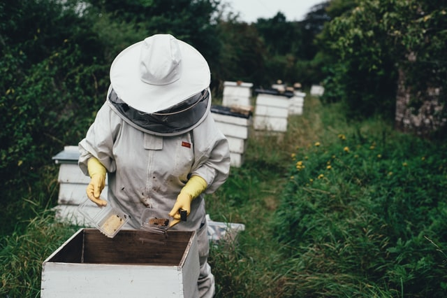Tips for Running a Bee Farm