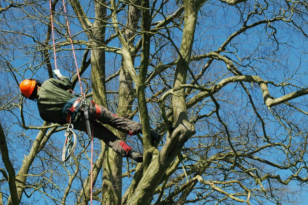 Tips to Find the Professional Arborist in Melbourne