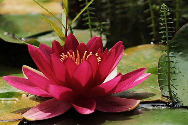 What Does Lily Flower Symbolize